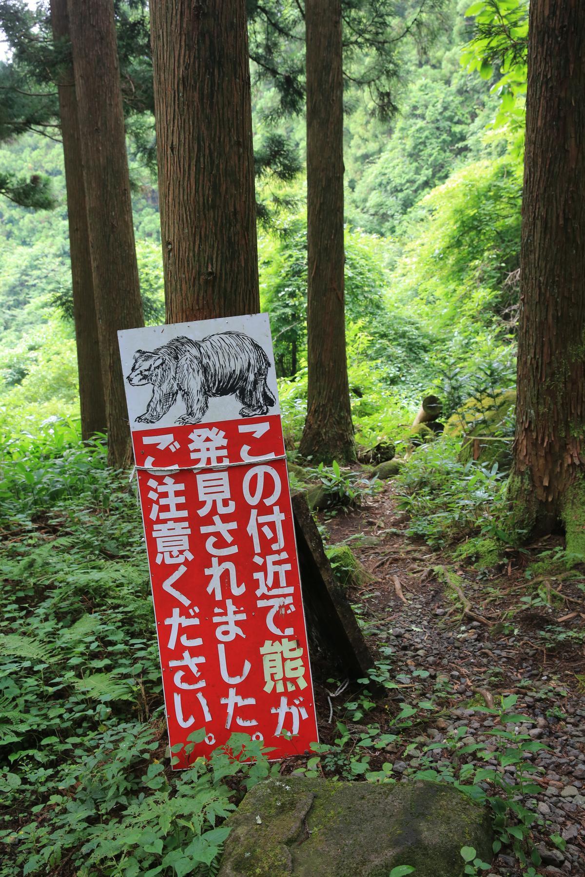 據當地人描述,近來真的有熊出沒。