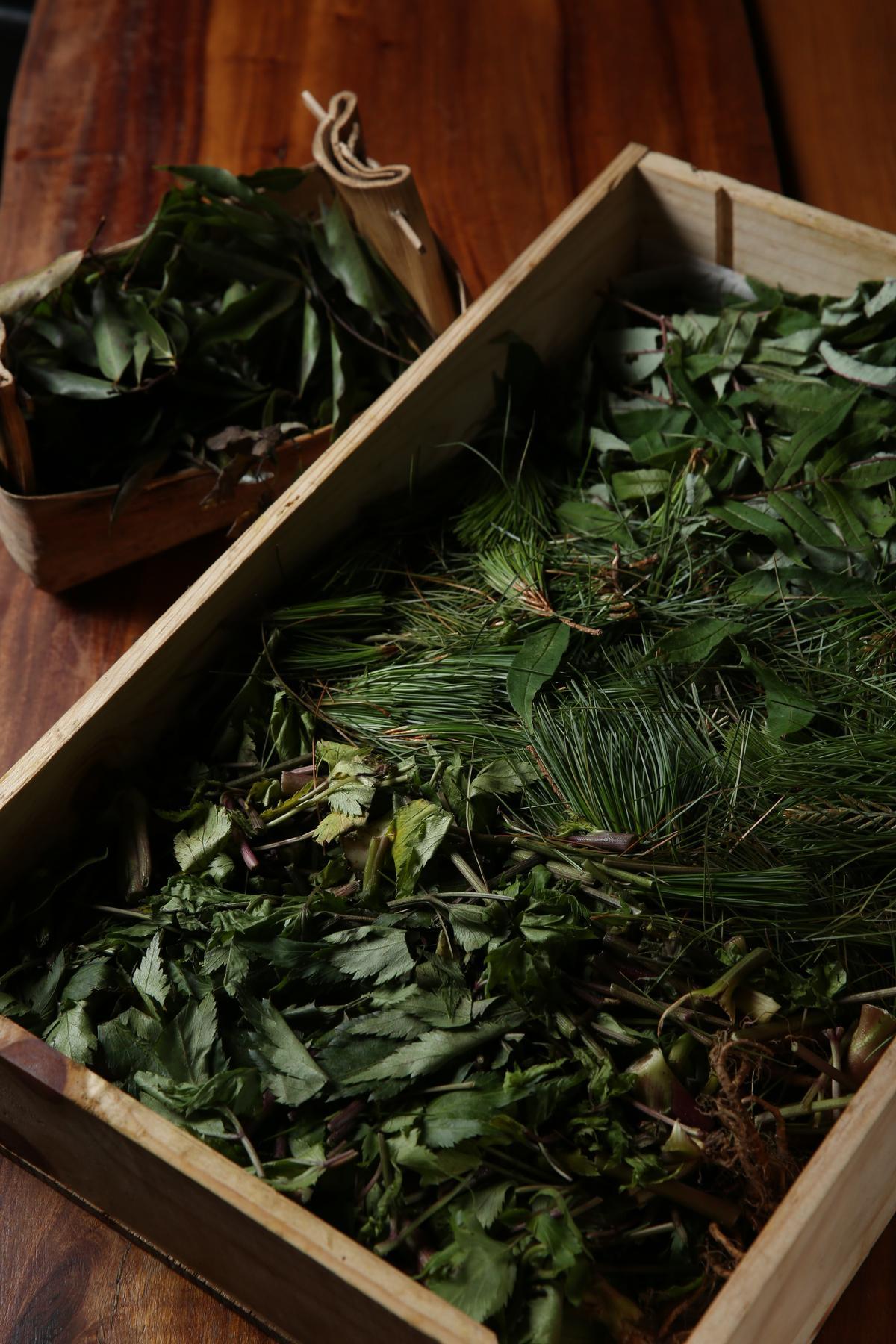 Akame不用外來香料,特別請人採集土肉桂、土當歸、五葉松、刺蔥等原生種香草植物。