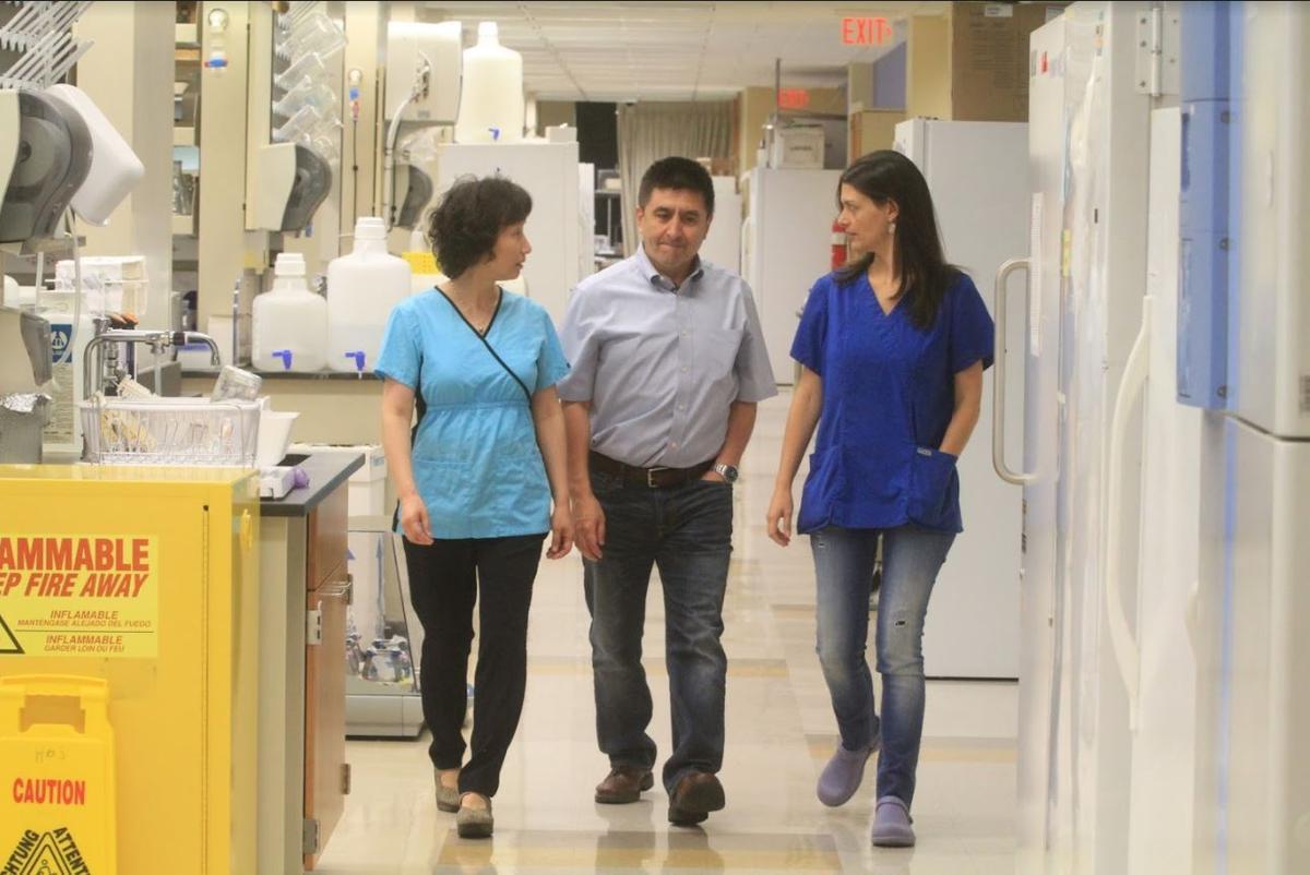 在米塔利波夫領導的研究中,馬虹負責的是後期的幹細胞分析,Nuria Marti-Gutierrez則負責前期的受精等程序。