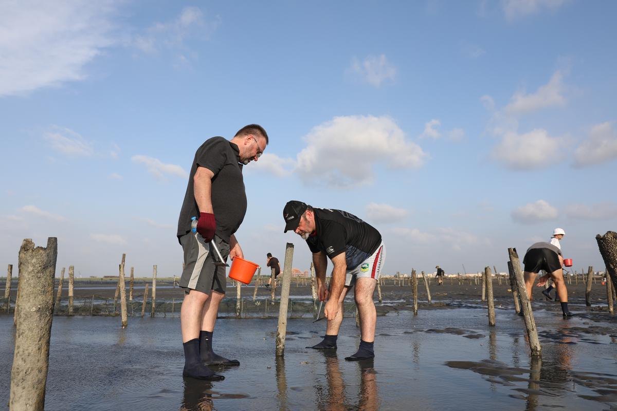 旅客在蚵田內,體驗徒手挖蛤仔。