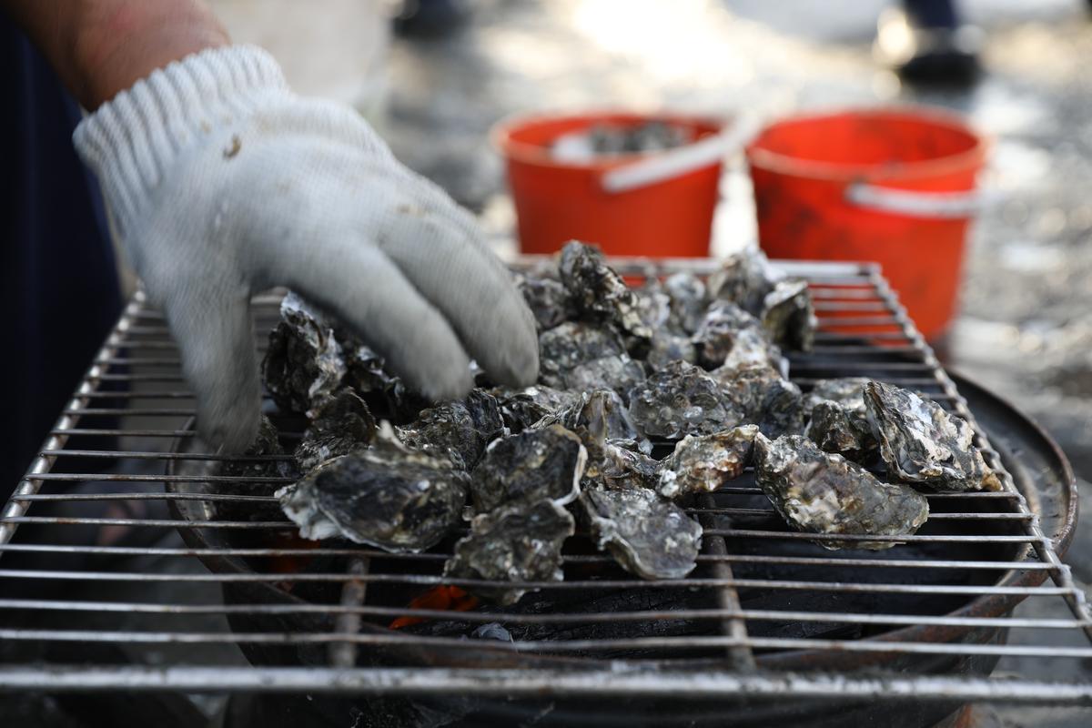 在蚵田內,可以直接品嘗烤蚵。