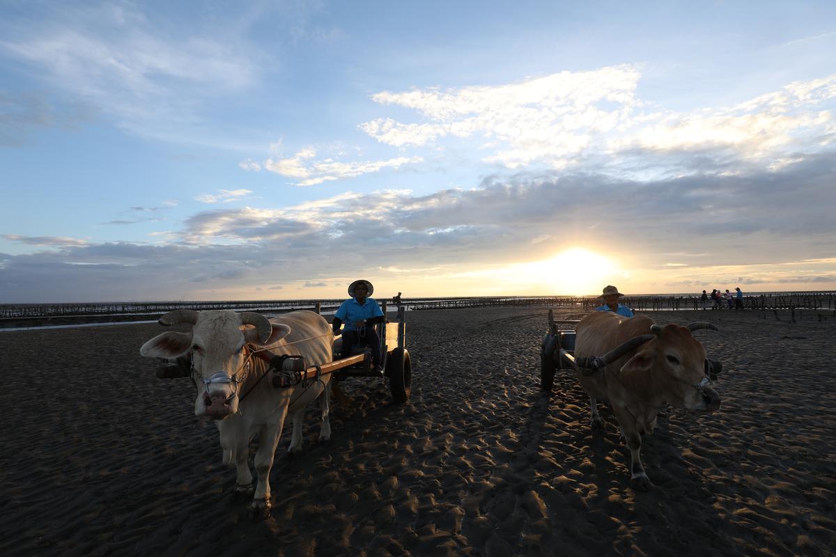 李福相與小白,在夕陽時分一起走在蚵田裡。