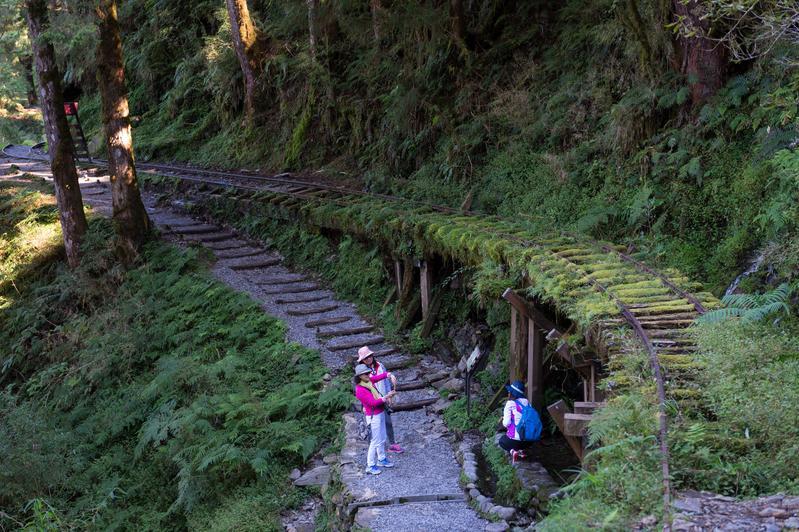 以昔日運材軌道打造的「見晴懷古步道」,沿路由廢棄鐵軌與青苔植物交織成美景。