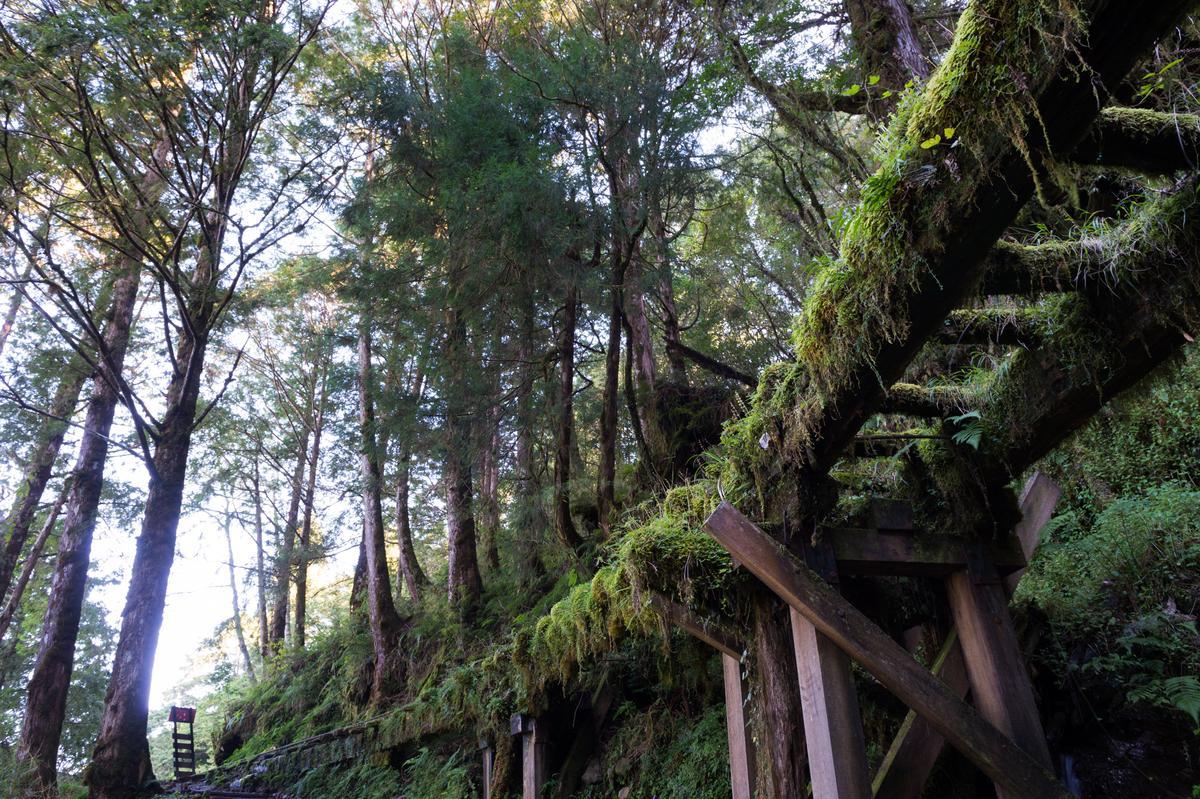 森林中的廢棄鐵道,有種空靈之美。