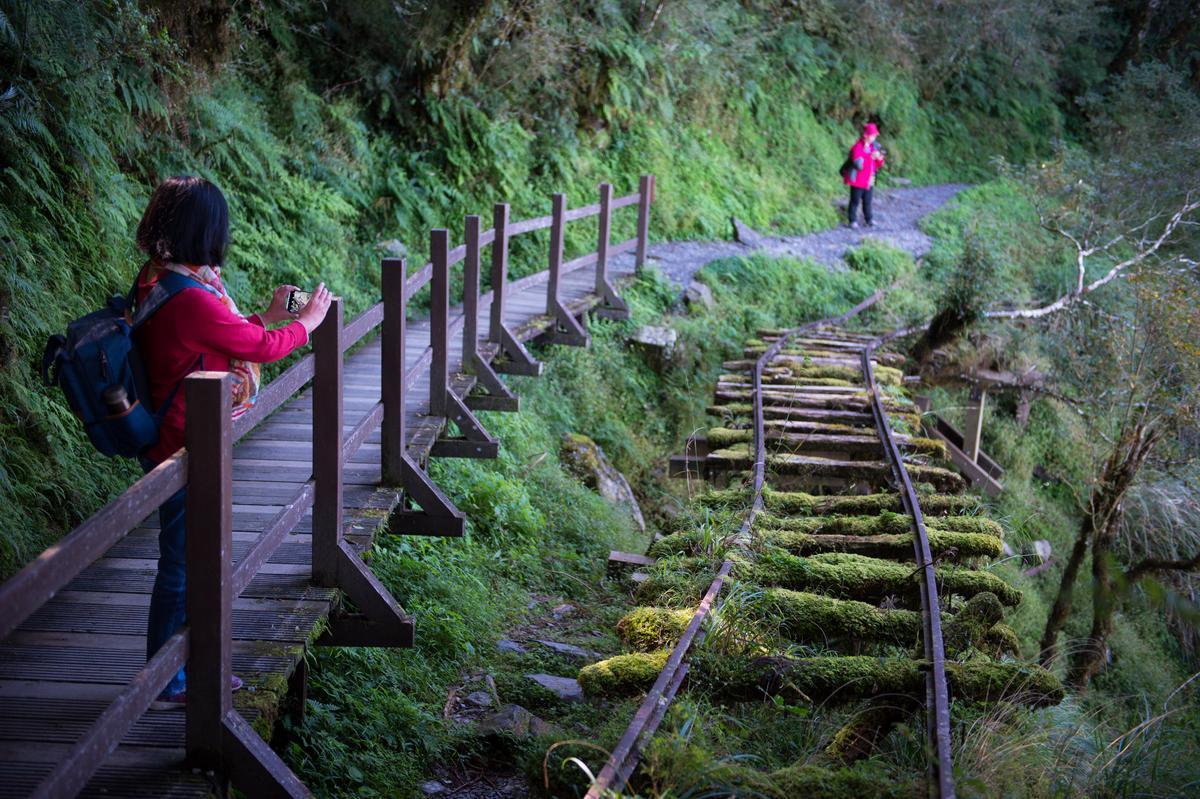 頹圮又彎曲的運材鐵道成了拍照焦點。
