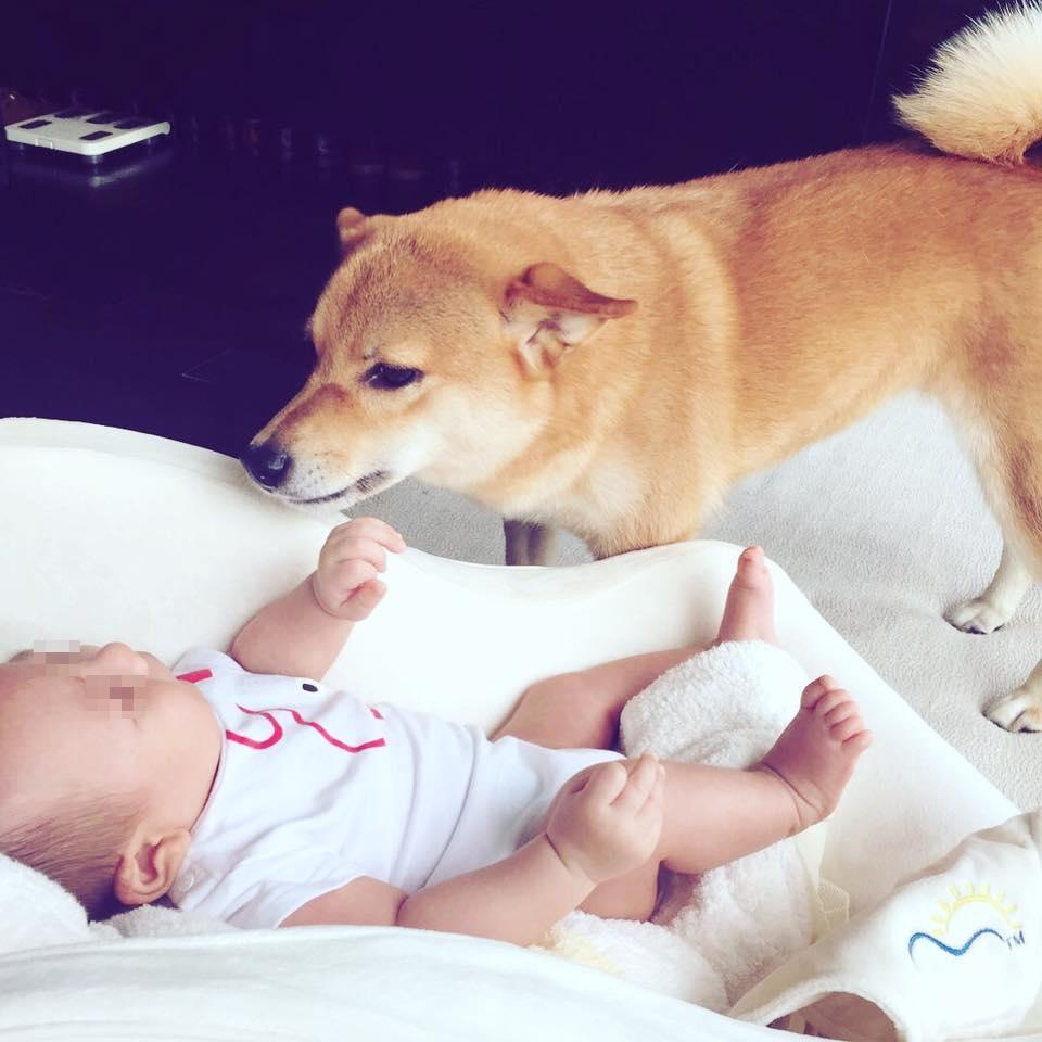 林可彤表示狗狗跟兒子相處很好,狗姐姐還會陪著兒子睡覺。(會星堂提供)