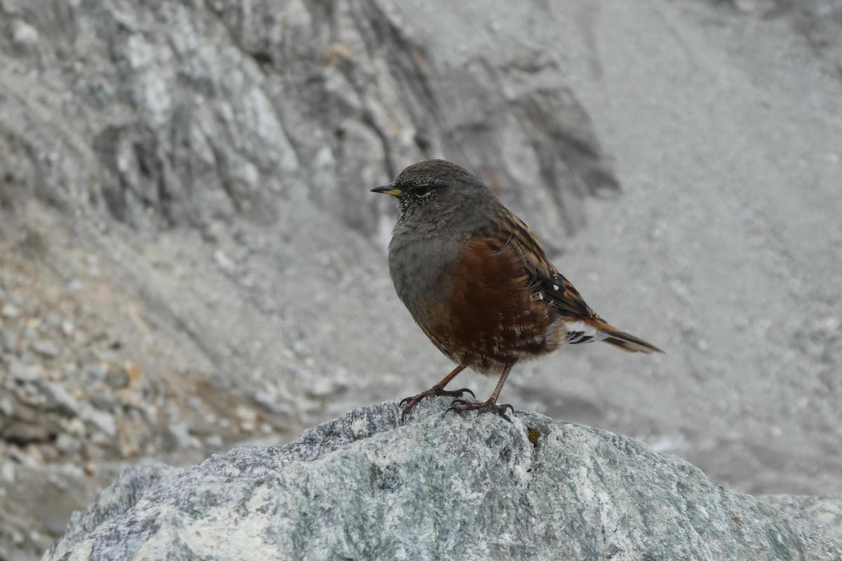附近的鳥類會來此撿食人吃的食物。