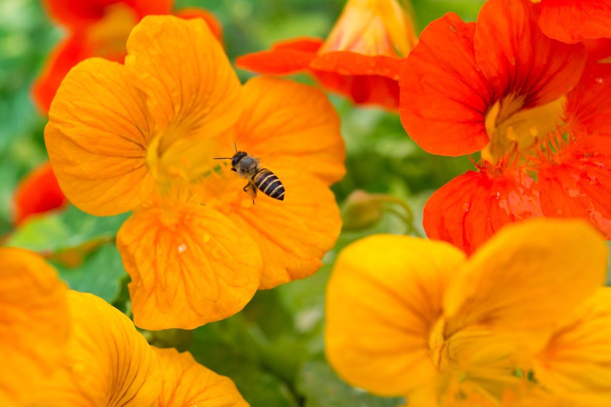 花叢間有翩飛的蜜蜂、蝴蝶,大地很有生氣。