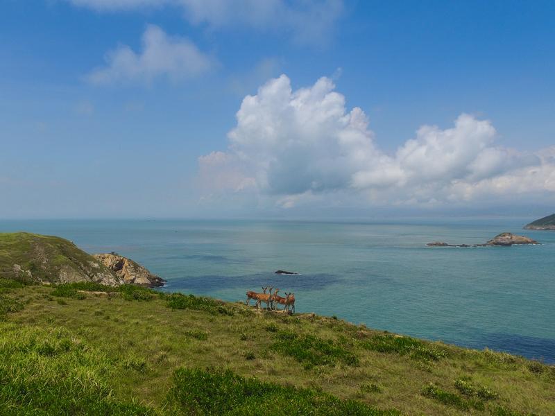 大坵島上最著名的就是梅花鹿。