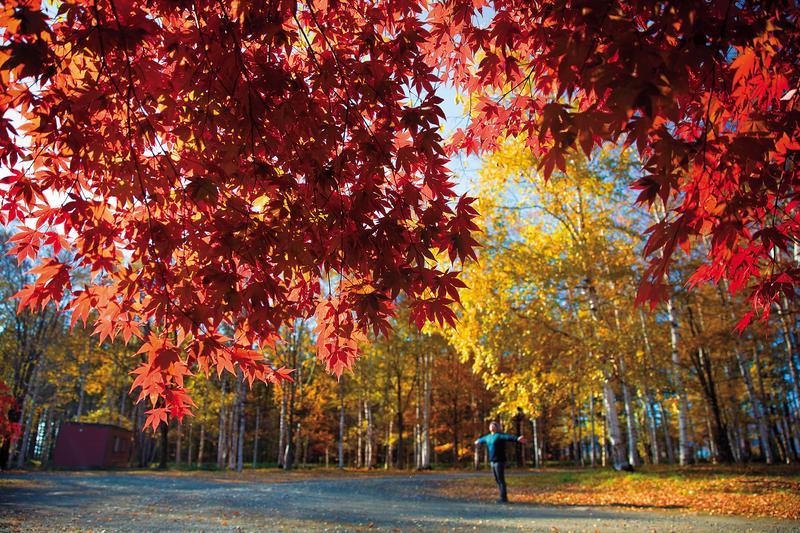站在紅葉下, 空氣中傳來陣陣香氣。