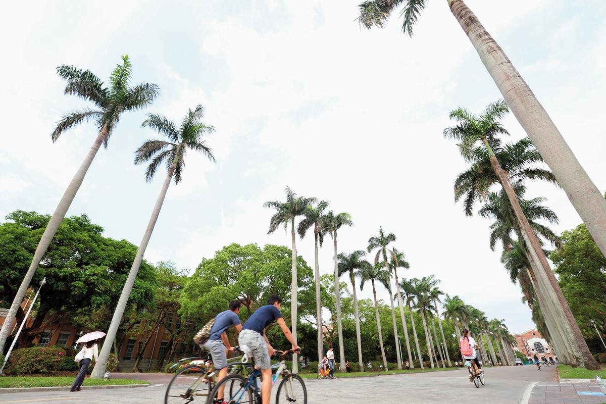 椰林大道是台大象徵,這次遴選校長,是中研院人選最接近校長寶座的一次。