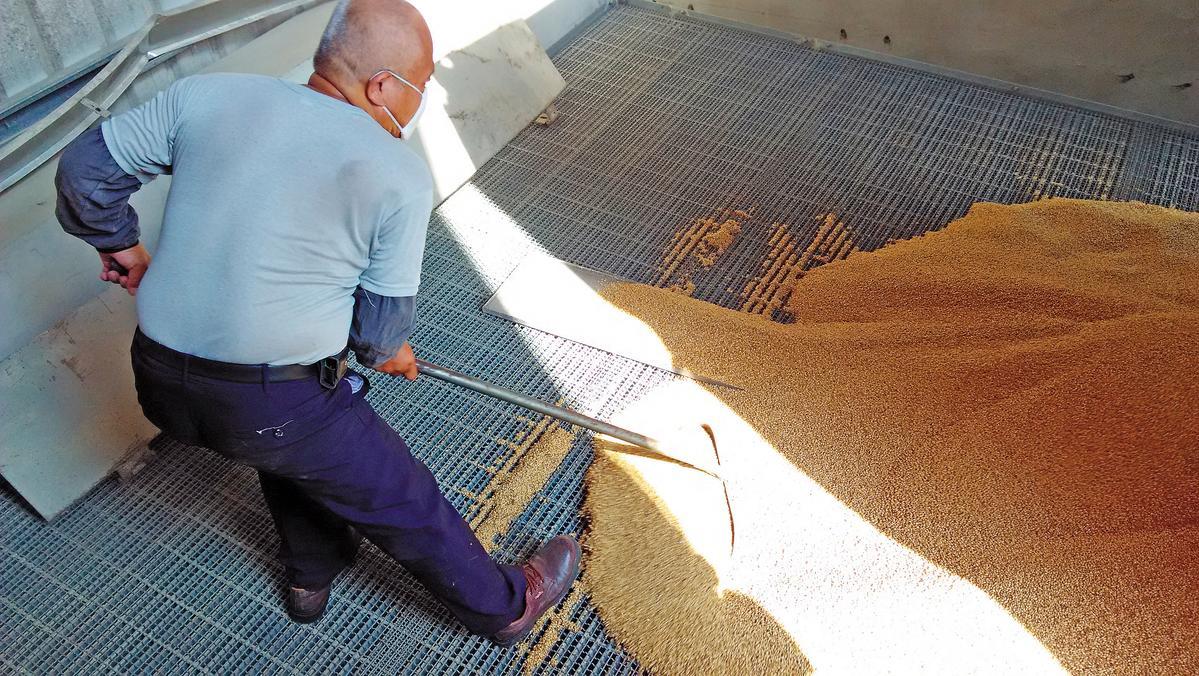 OMAR單一麥芽威士忌使用蘇格蘭進口大麥芽,浸泡在水中使其發芽後,以泥煤或煤炭烘乾,最後將麥芽磨碎備用。
