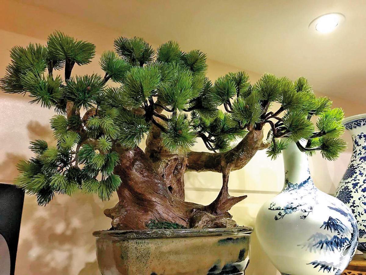 這棵松樹盆栽也是仿真的,據說王董還義賣過一盆20萬元的。