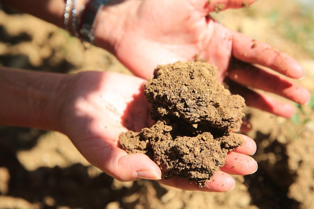 卡斯提里歐尼葡萄園的土質為涵水良好的黏土。