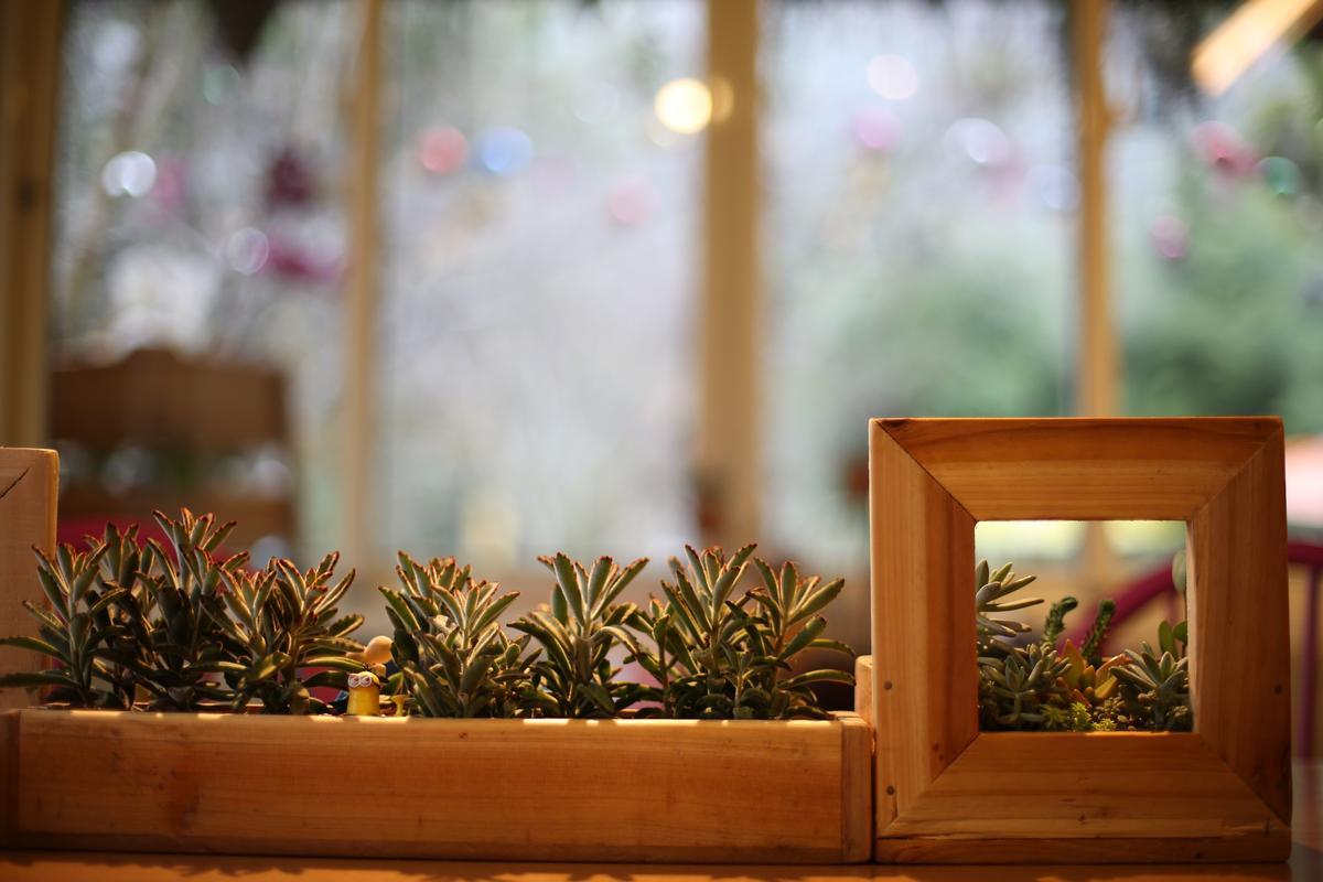 女主人把可愛的多肉植物變成室內畫景。