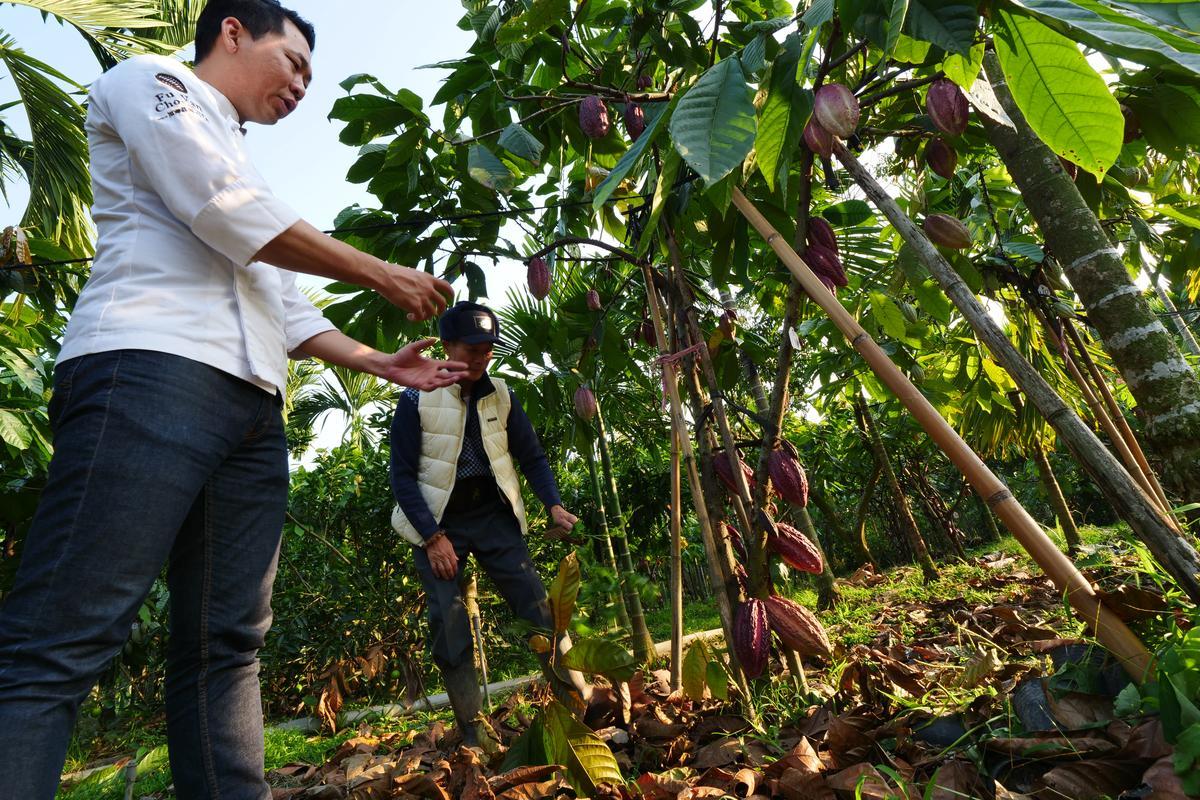 屏東萬巒、內埔及來義等地區,跟世界盛產可可豆的區域有相似氣候,許多農友轉型,種出台灣本土可可豆。