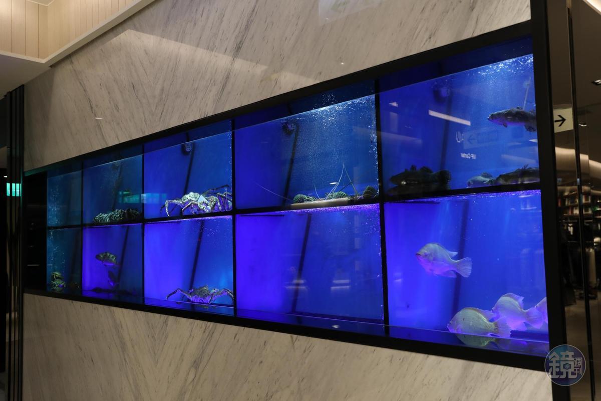 門口規劃長超過4公尺的水族箱,用生猛海鮮吸引過路客。