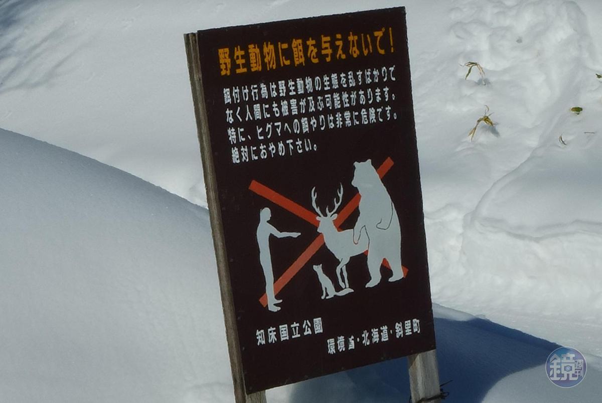 在「知床國家公園」內禁止動身餵食。