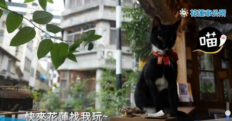 花蓮市公所昨(8日)推出影片,介紹花蓮咖啡館和質感小店,一天內就有1263次分享。(翻攝花蓮市公所粉絲專頁)