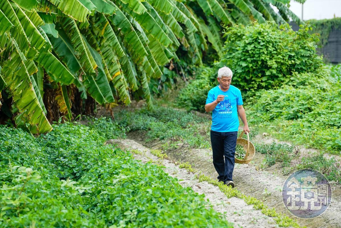 林中智在「實驗農場」復育台灣原生種的雞屎藤,種植角豆、野生百香果及各式薄荷。