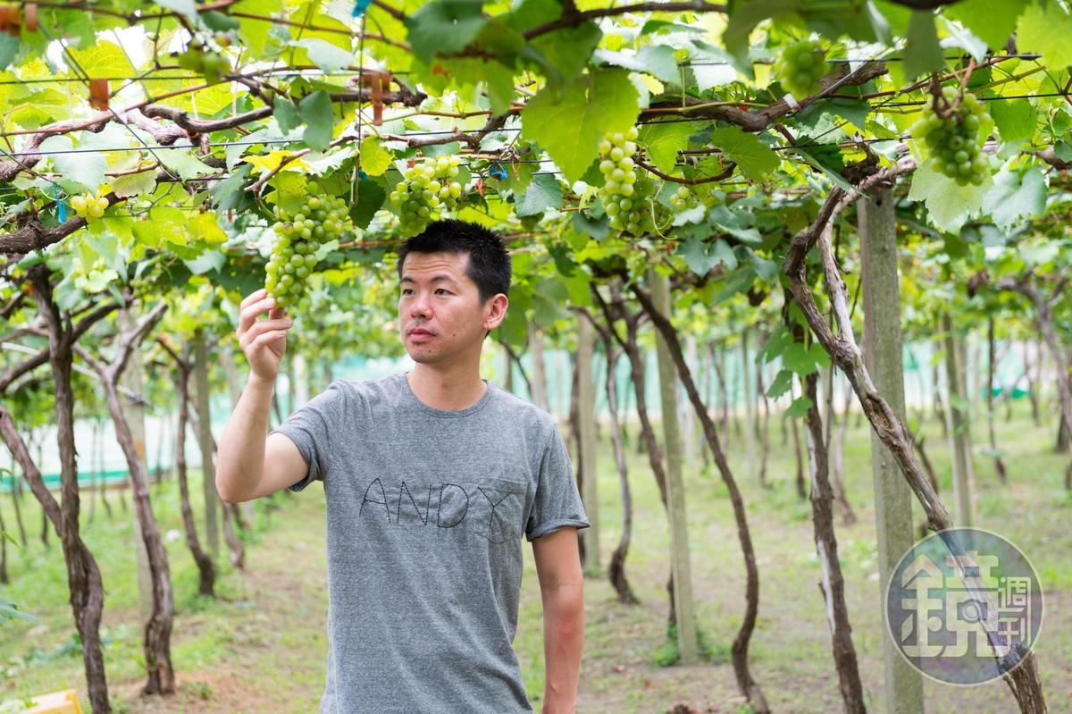 稗田良平特別愛前進產地,他到「威石東酒莊」位於后里的金香葡萄園探訪。