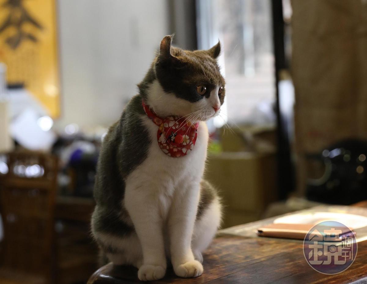 店貓因耳朵像蝙蝠俠,而取名韋恩。