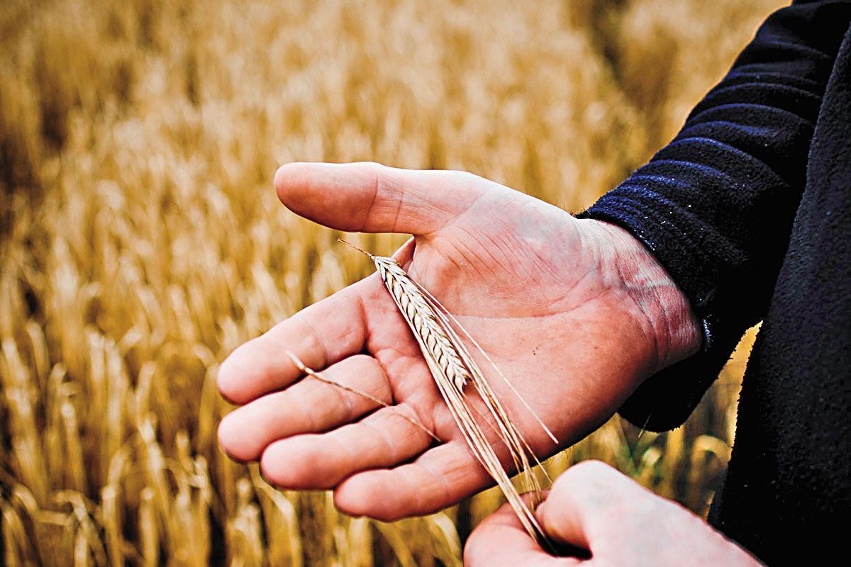 布萊迪單一麥芽威士忌使用100%蘇格蘭大麥,有時甚至超過50%艾雷島大麥。詹麥文援助當地農夫種植大麥、鼓勵出口的同時,也振興了艾雷島的經濟發展。