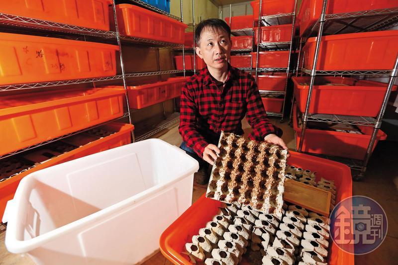 人工飼育的蟑螂極為嬌生慣養,謝瑋晏的廠區曾因停電導致蟑螂死了幾乎一半,損失至少200萬元。