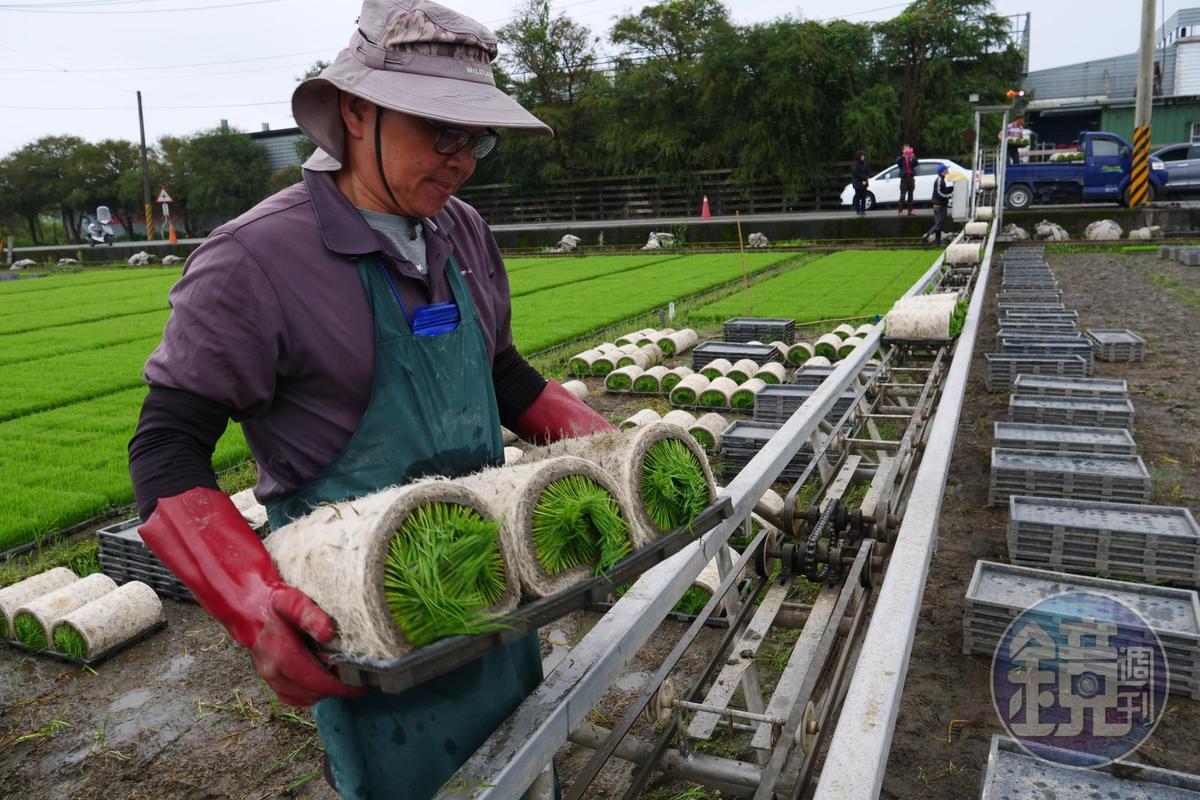 秧苗一捲捲以載運平台搬上車,意謂春耕農忙的開始。