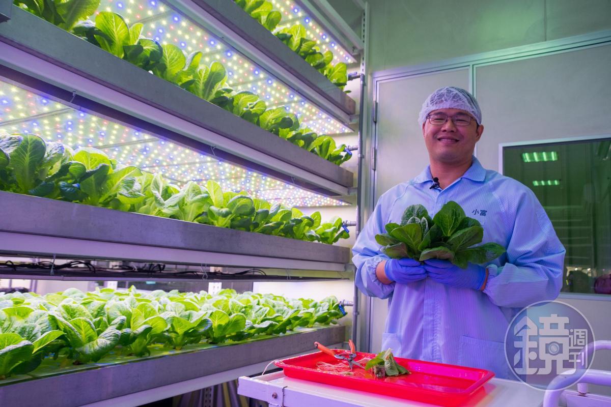 曾昭富的團隊針對不同品種量身開發燈具,蔬菜長得頭好壯壯。