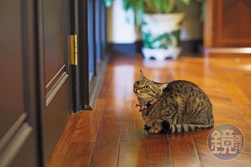 比較懂事的蔡想想出門走一走會自己回家。