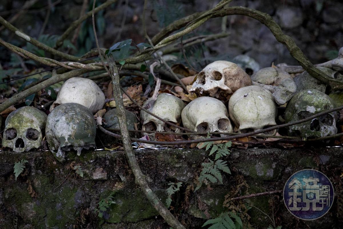 無味之樹的樹下有不少頭骨。