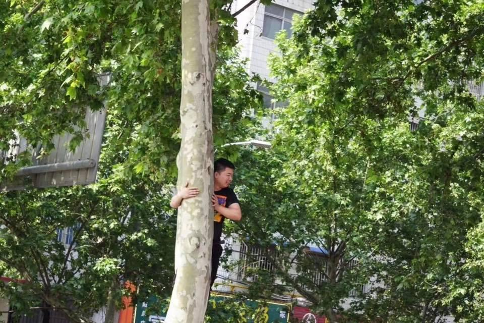 有歌迷來到現場卻被擠到後面,只好爬樹從高處看。(林志穎臉書)
