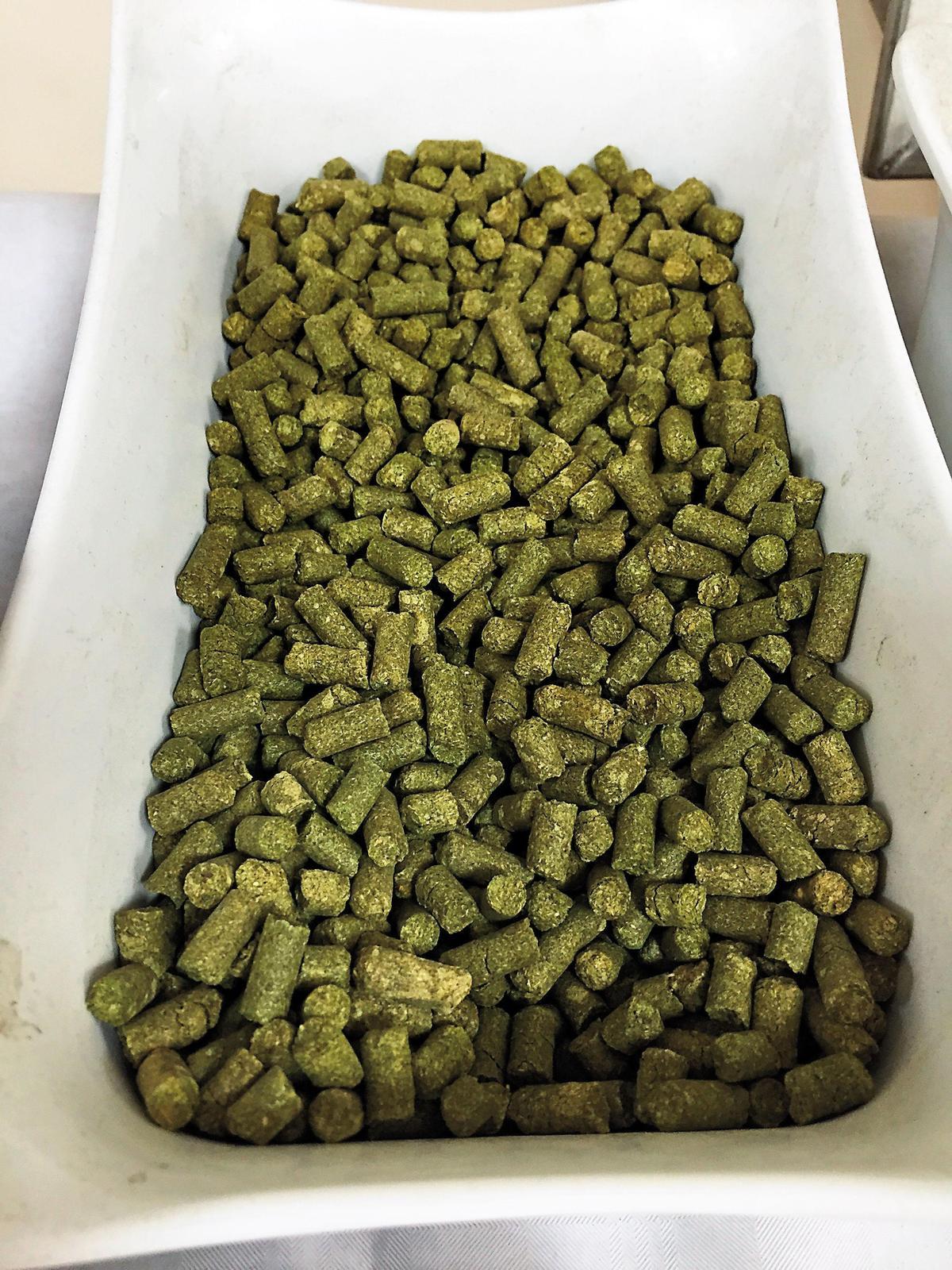 啤酒花不但可以延長啤酒的保存,還能增添風幫助產生綿密泡沫,實務上經常以錠劑替代啤酒花使用。圖為錠劑。