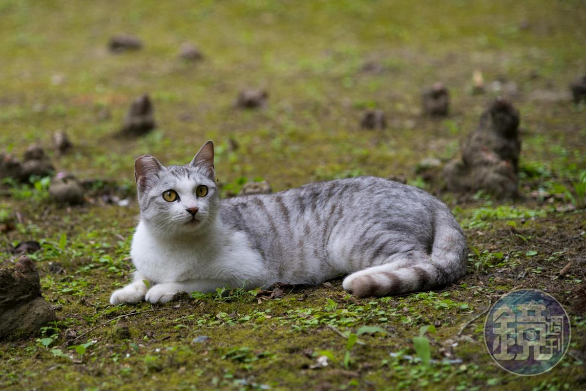 根本就是隻網美貓。