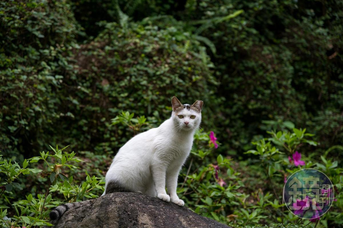 園區的貓咪,其實尚不親人。