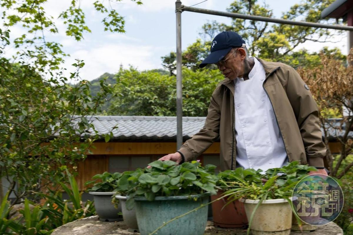 山上的小花園,他們也種了各式香草。