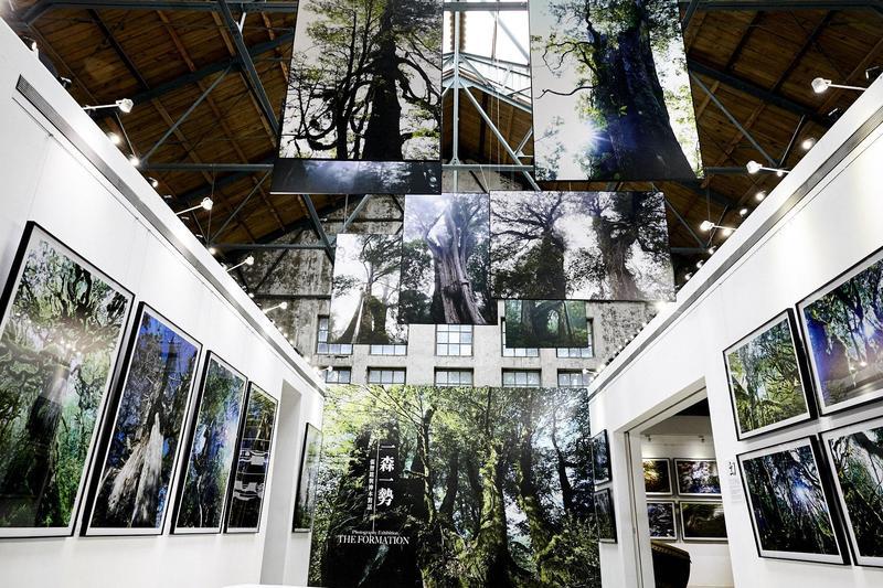 《一森一勢》攝影展現正於華山展出。(緯泰創意行銷提供)