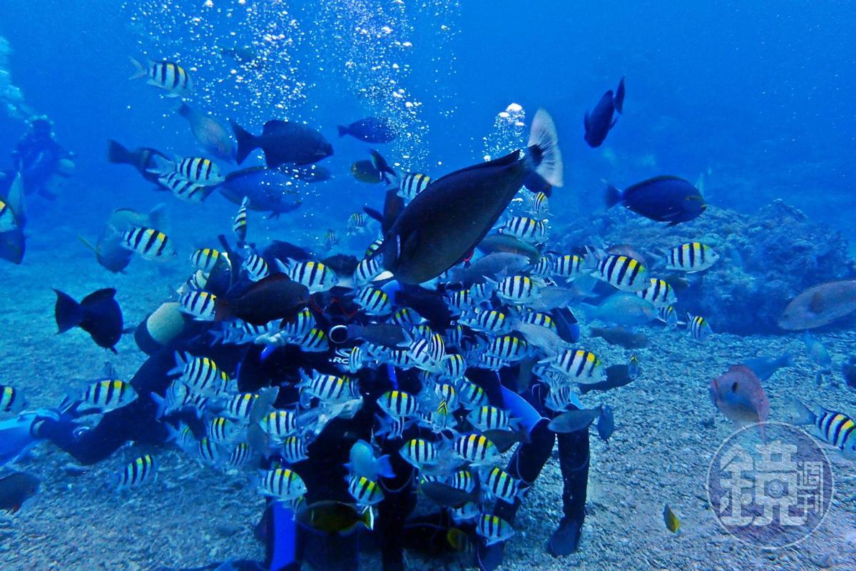 綠島海底世界超美,被澳洲選為世界百大潛點之一。