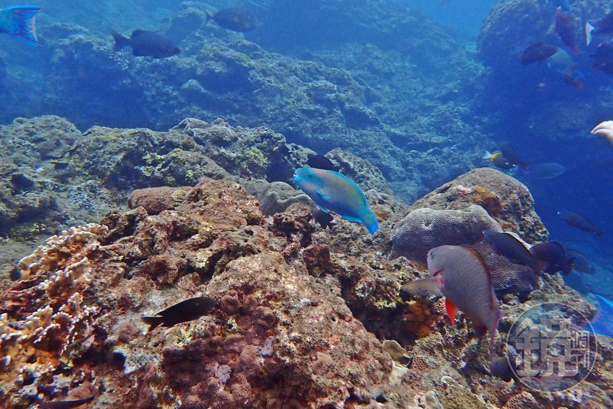 綠島潛水擁有清澈的水質及魚群。
