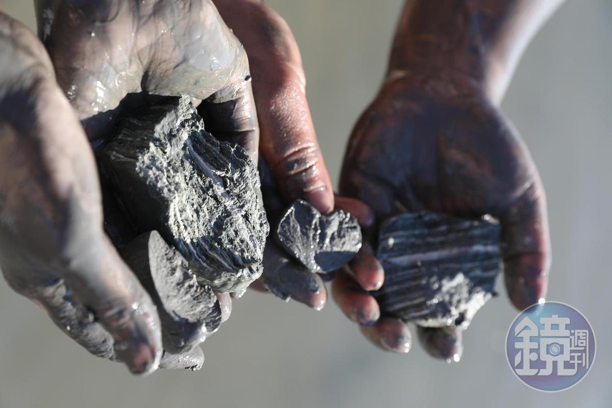 在岸邊可徒手挖掘死海泥,質感有如黏土。