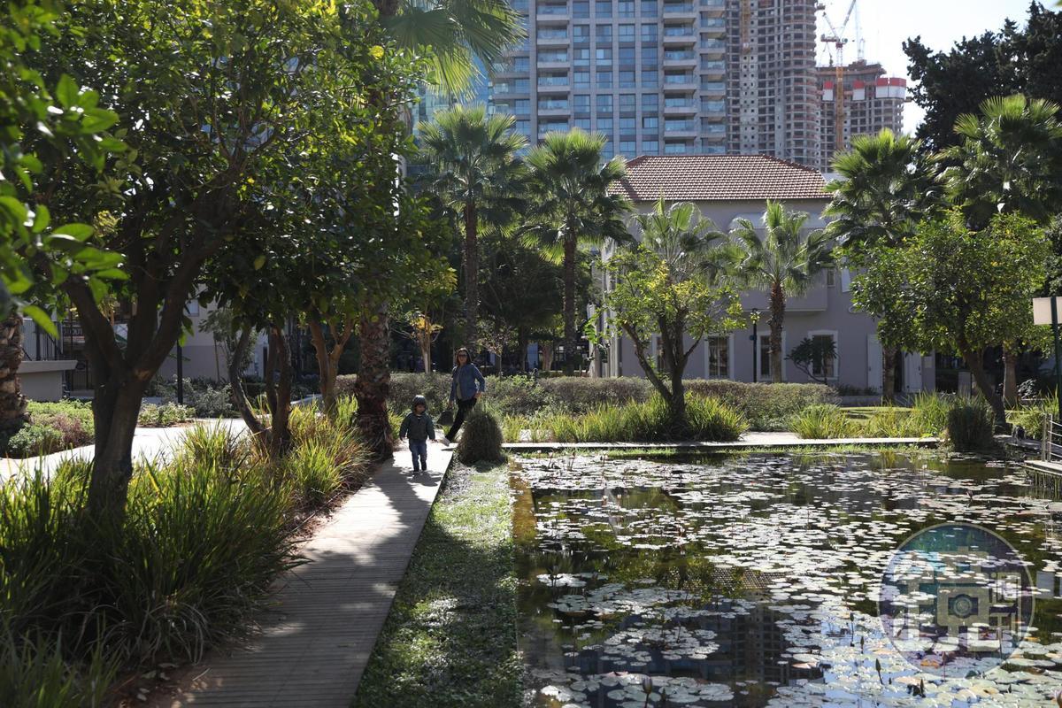 大樓外就是整片綠地,還有滿池荷花。