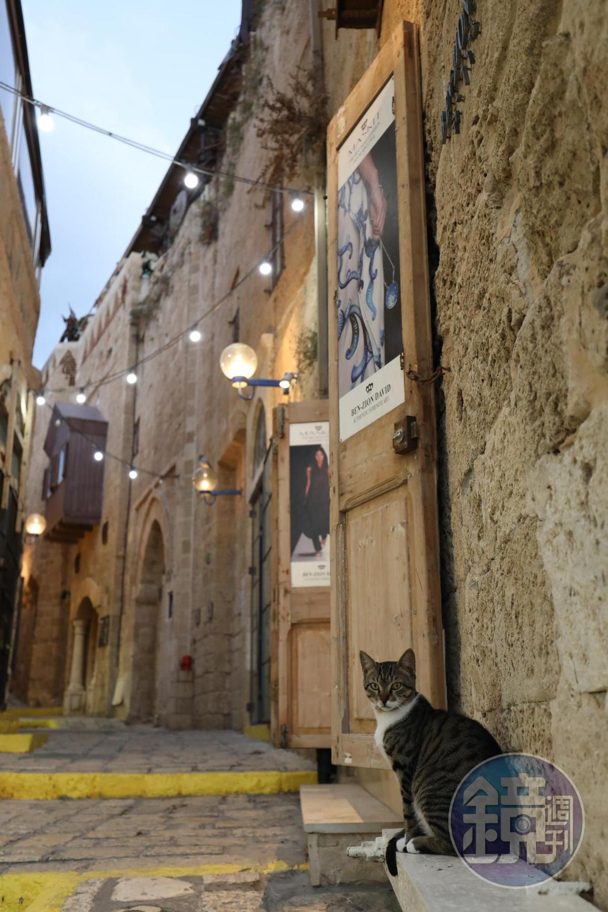 冷不防在雅法老城轉角遇見一隻炯炯有神的貓,看我的眼神好像在說,這裡,牠才是這座城的主人。