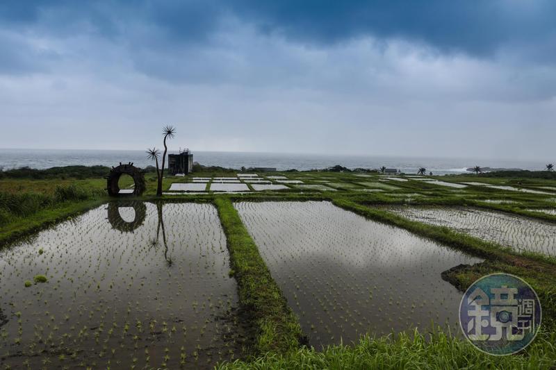 花蓮豐濱鄉的港口部落,有少見的海稻米水梯田,這是阿美族人傳統的飲食地景。
