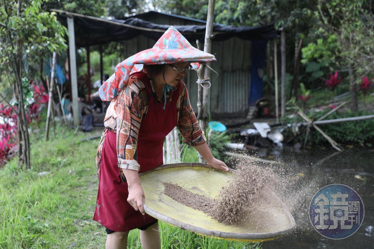 「莎娃綠岸文化工作室」主人陳鎮妹的「曙光米」,連山上猴子都來偷吃。