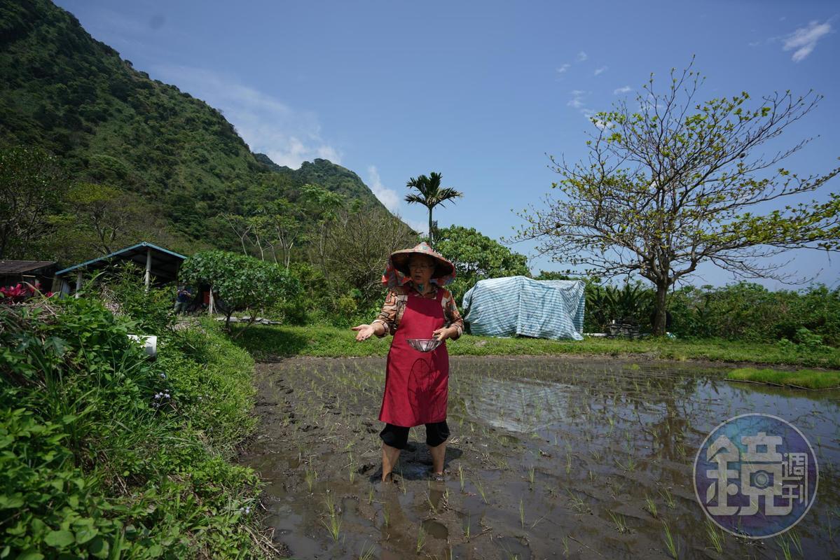 陳鎮妹重回家鄉耕田、種菜,這是她療癒身心的選擇。