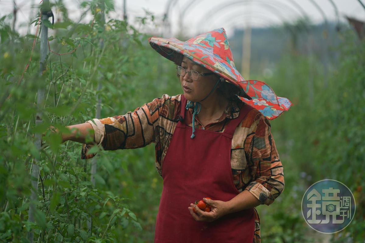 陳鎮妹回到港口部落種植有機蔬菜。