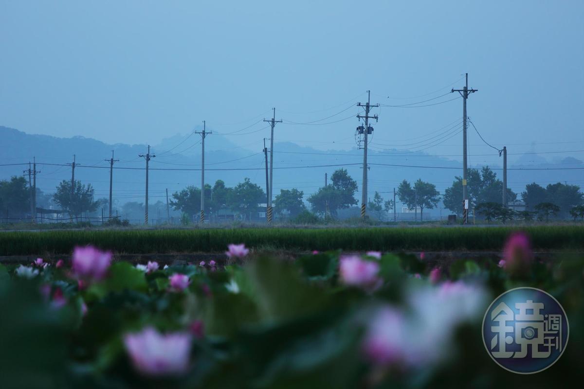 每年6~8月,白河一帶就變身成蓮花小鎮,與農舍屋瓦交織成秀麗的鄉村風景。