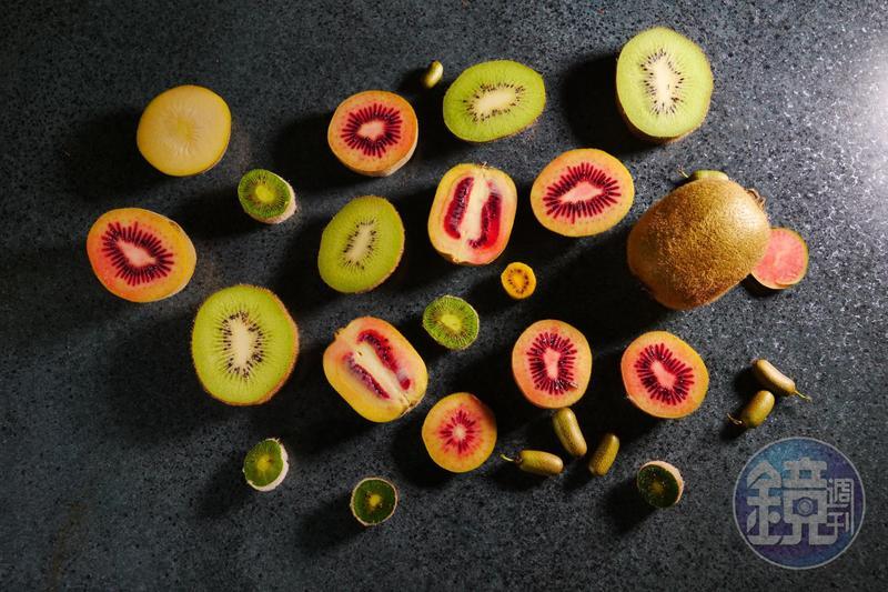 在紐西蘭有多達24種奇異果,造型多變,果肉也不只黃色和綠色,口味除了酸、甜,還有會讓人辣到咳嗽的品種。