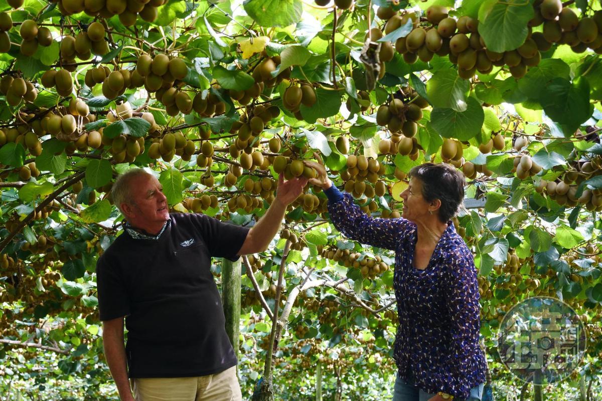 我們拜訪一對退休夫妻Tim(左)和Linda(右)所經營的果園。